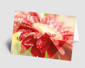 Grusskarte 1520110 rote Gerbera